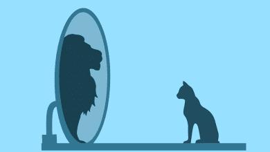 lav-mačka-samopouzdanje