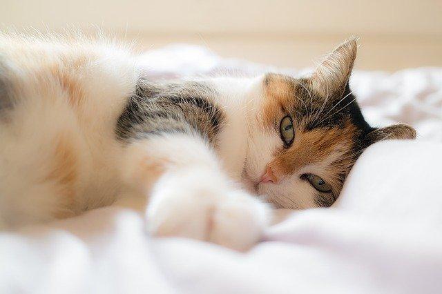 mačka-sunce