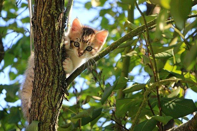 mačka-na-drvetu