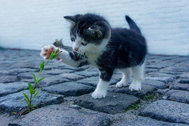 mala-mačka