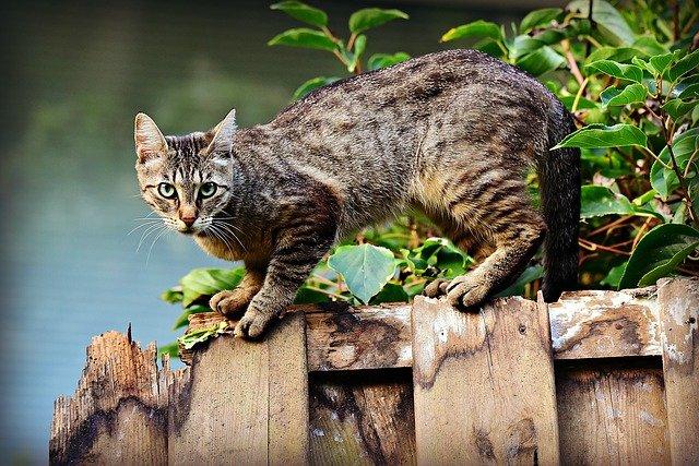 mačka-ograda
