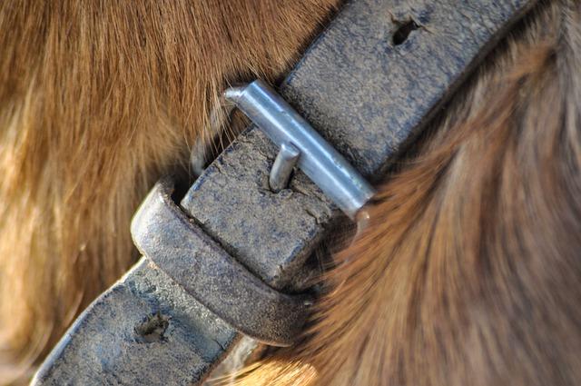 pas ogrlica-za-pse
