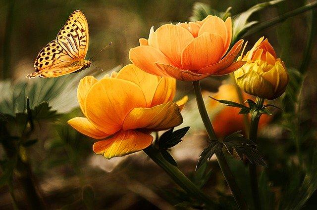 priroda-flora-fauna