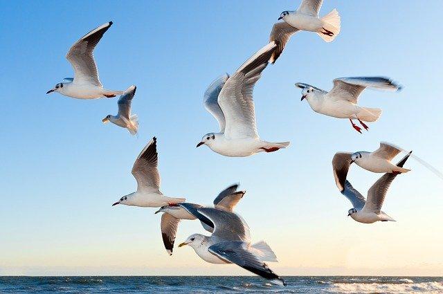 ptice-jato-slovo-V