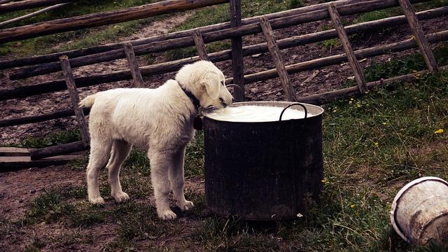 mleko-kuče