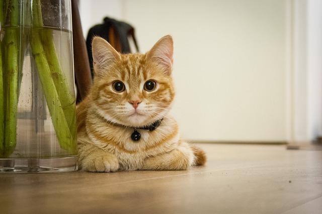 mačka-u-kući