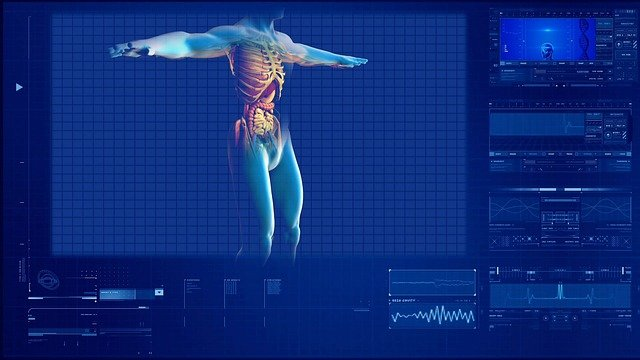 bubrezi-anatomija