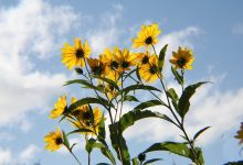 fotosinteza-biljke