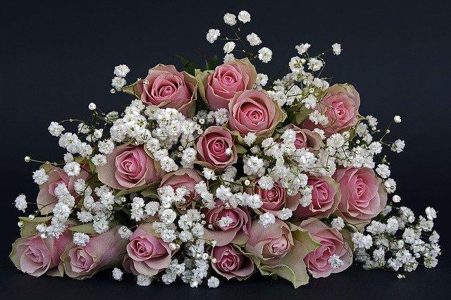 ruže-roze